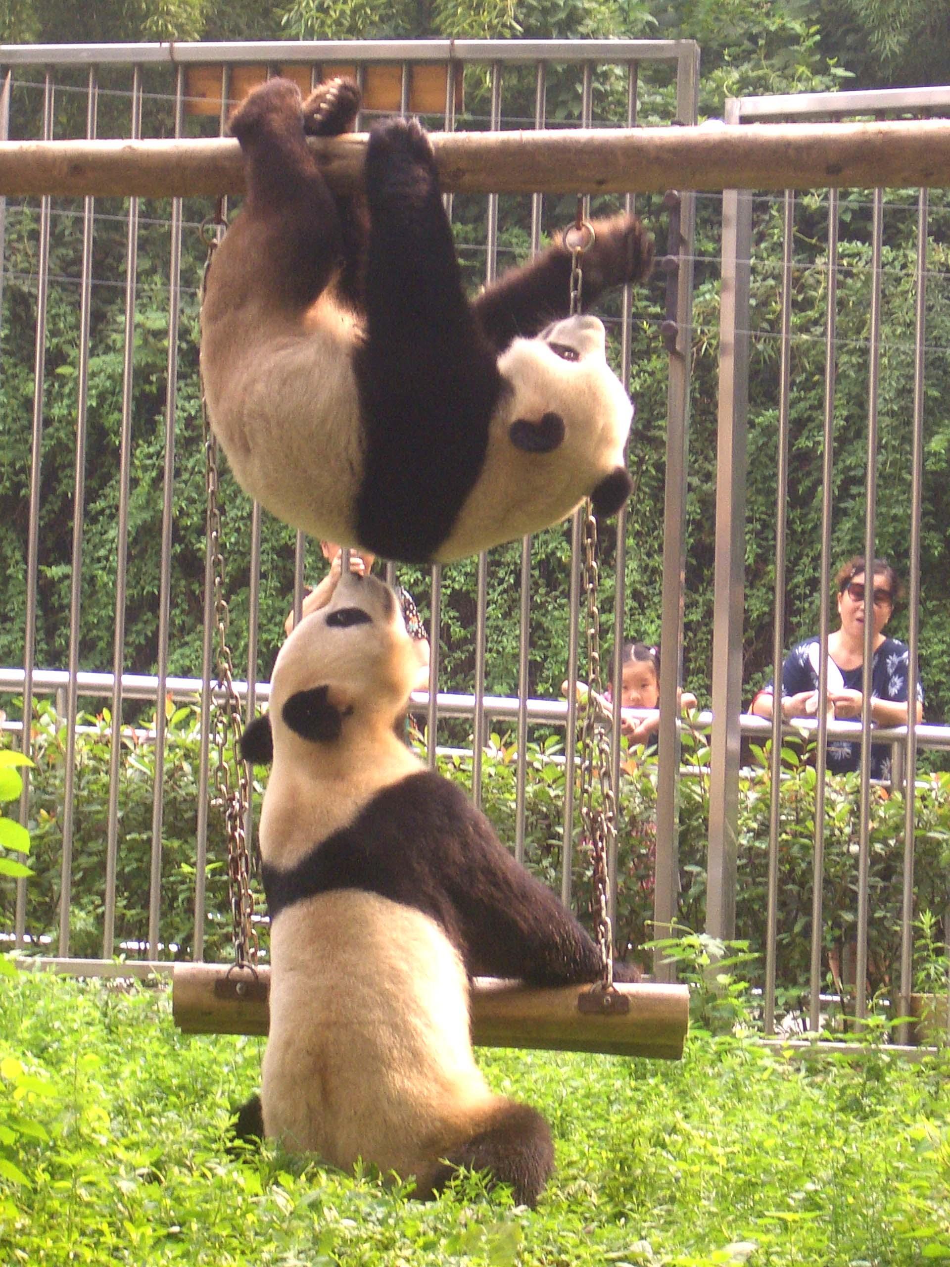 武汉动物园欢迎您来墨水湖畔拾翠,到动物王国猎奇.